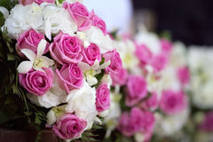 Roses. Image libre de droits