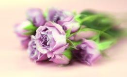 Free Roses Royalty Free Stock Image - 4300256