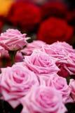 roses стоковые изображения