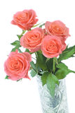 Roses Stock Photography