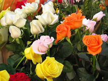 Roses. Variety of beautiful roses, yellow,orange and white Stock Photography