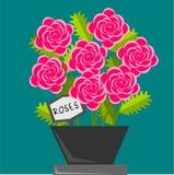 roses Photographie stock libre de droits