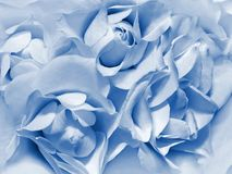 Roses. Allegorical clouds in the form of white roses Royalty Free Stock Photo