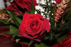 roses Images libres de droits