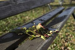 Roses abandonnées sur un banc en parc Images libres de droits