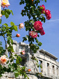 Roses and amphitheater Royalty Free Stock Image