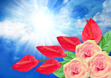Roses and anthurium flower on sky background Royalty Free Stock Images
