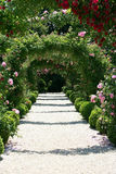 Roses Arch in the Garden. Blooming Roses Arch in the Garden Stock Images