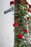 Roses around the corner of Lombardsteeg (Gouda / Holland) Stock Image
