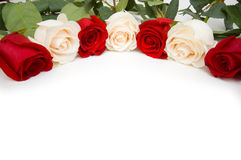 Roses arranged Stock Images