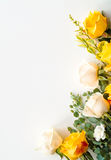 Roses arranged as a border Stock Photography