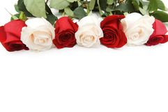 Roses arranged on white background with copyspace Royalty Free Stock Photography