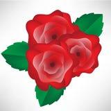 Roses arrangement Stock Images