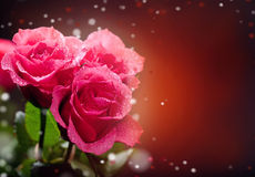 Roses Art Design. Stock Photo