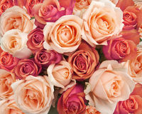 Free Roses As A Background Stock Photo - 41958620