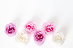 Roses as frame. Pink and white roses in the form of frame on white background Royalty Free Stock Images