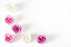 Roses as frame. Pink and white roses in the form of frame on white background Stock Image