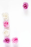 Roses as frame. Pink and white roses in the form of frame on white background Royalty Free Stock Image