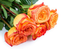 Roses as a gift for your favorite woman on a white background Stock Image