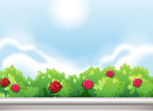 Free Roses At The Park Royalty Free Stock Photography - 45188407
