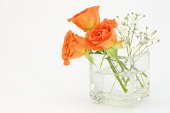 Roses and babys breath in glass vase Stock Photography