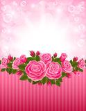 Roses backdrop Royalty Free Stock Photo
