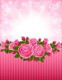 Roses Backdrop Royalty Free Stock Photo