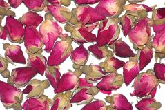 Roses background Royalty Free Stock Photography