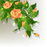 Roses background. Beautiful background with yellow roses and green leafs Royalty Free Stock Images