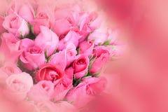 Roses background. Stock Image