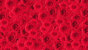 Roses background. stock footage
