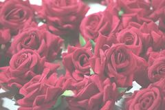 Roses background. Enrich experience of sensation and decor of sensational Roses Stock Photo