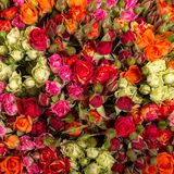 Roses background. Stock Photography