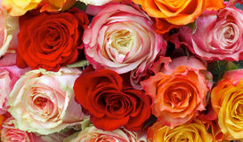 Roses Background Royalty Free Stock Photos