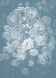 Roses background. Pale gray and white background of roses some open and some in bud stock photo