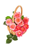 Roses in a basket. Royalty Free Stock Photos