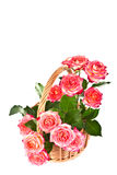Roses in a basket. Royalty Free Stock Photo