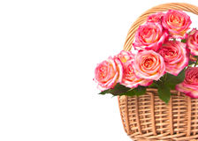 Roses in a basket. Royalty Free Stock Images