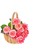 Roses in a basket. Stock Photos