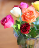 Roses. Beautiful roses in an array of different colors Royalty Free Stock Images