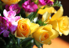 Roses. Beautiful roses in an array of different colors Stock Photo