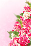 Roses on beautiful background. Royalty Free Stock Photo