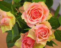 Roses. A beautiful bunch of roses Royalty Free Stock Photo