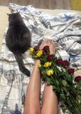 Roses and cat. Roses on the bed and a cat stock images