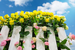 Roses behind the fence Royalty Free Stock Images