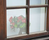 Roses behind old window Stock Image