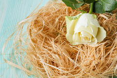 Roses in a bird nest Royalty Free Stock Images