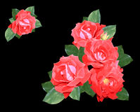 Roses on a black background Stock Images