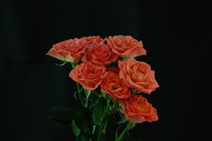 Roses in a black background Stock Photo