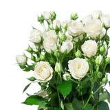 Roses blanches Images libres de droits